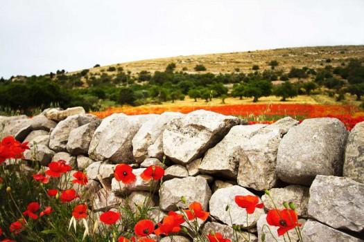 Ragusa stonewall
